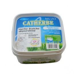 Herbes fraîches dépuratives Catherbe Girard