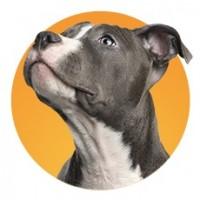 boutique chien en ligne animaux market. Black Bedroom Furniture Sets. Home Design Ideas