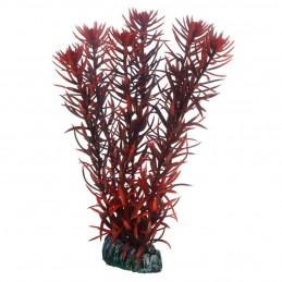 Hobby Eusteralis HOBBY  Plantes