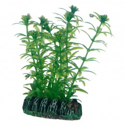Hobby Lagarosiphon HOBBY  Plantes