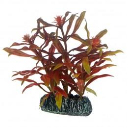 Hobby Nesaea HOBBY  Plantes