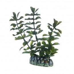 Hobby Bacopa HOBBY  Plantes