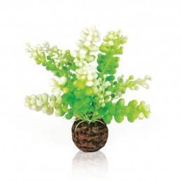 Oase Biorb plante Caulerpe