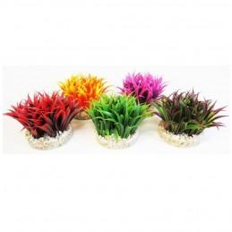 Sydeco aqua plant