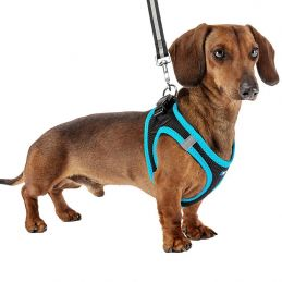 Harnais réfléchissant bleu pour chien