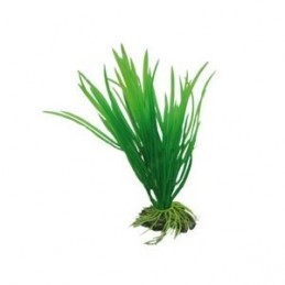 Hobby Cyperus HOBBY 4011444415004 Plantes