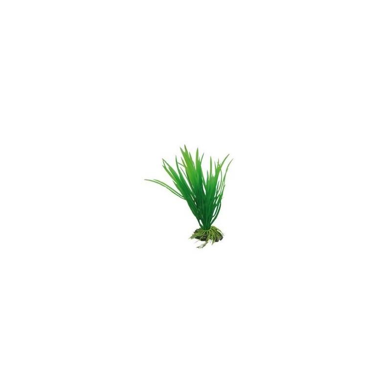 Hobby Cyperus