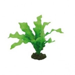 Hobby Echinodorus HOBBY 4011444415042 Plantes
