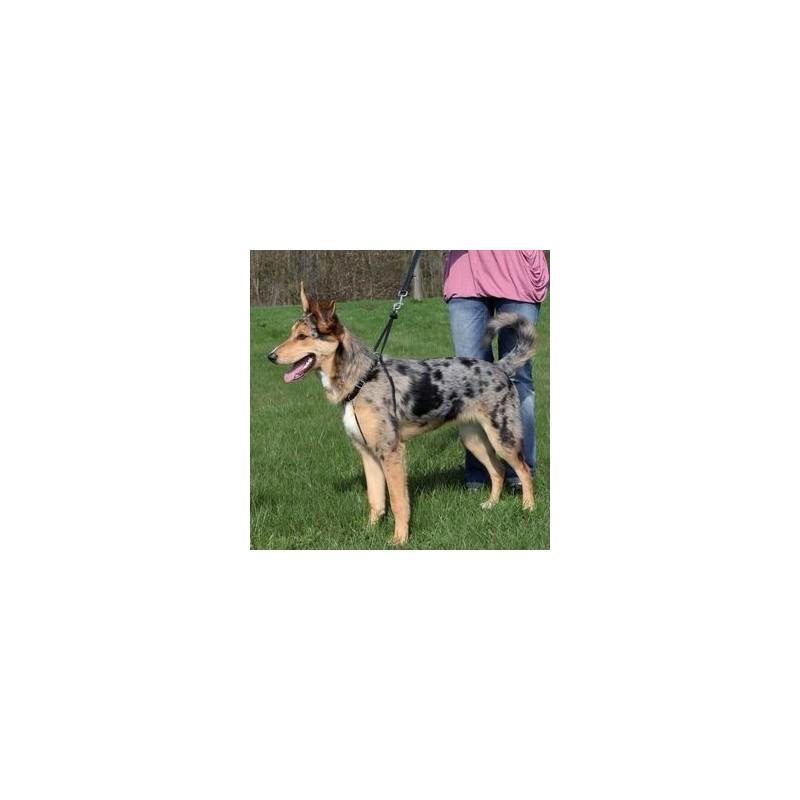 Harnais de dressage Trixie EasyWalk TRIXIE  Aide au dressage du chien