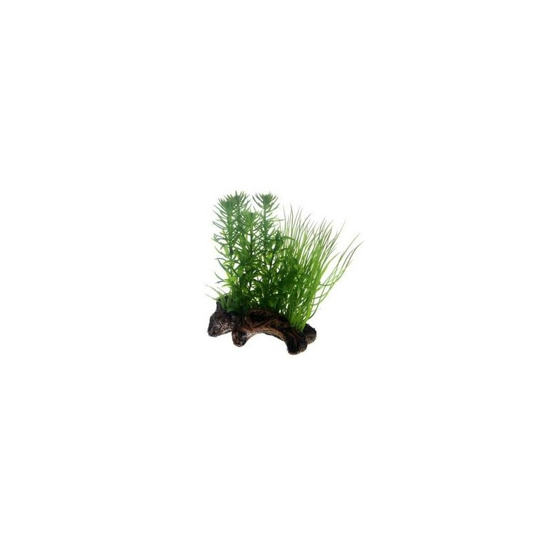 Hobby Flora Root 2